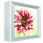 Standard Indoor Lightbox - brandexper